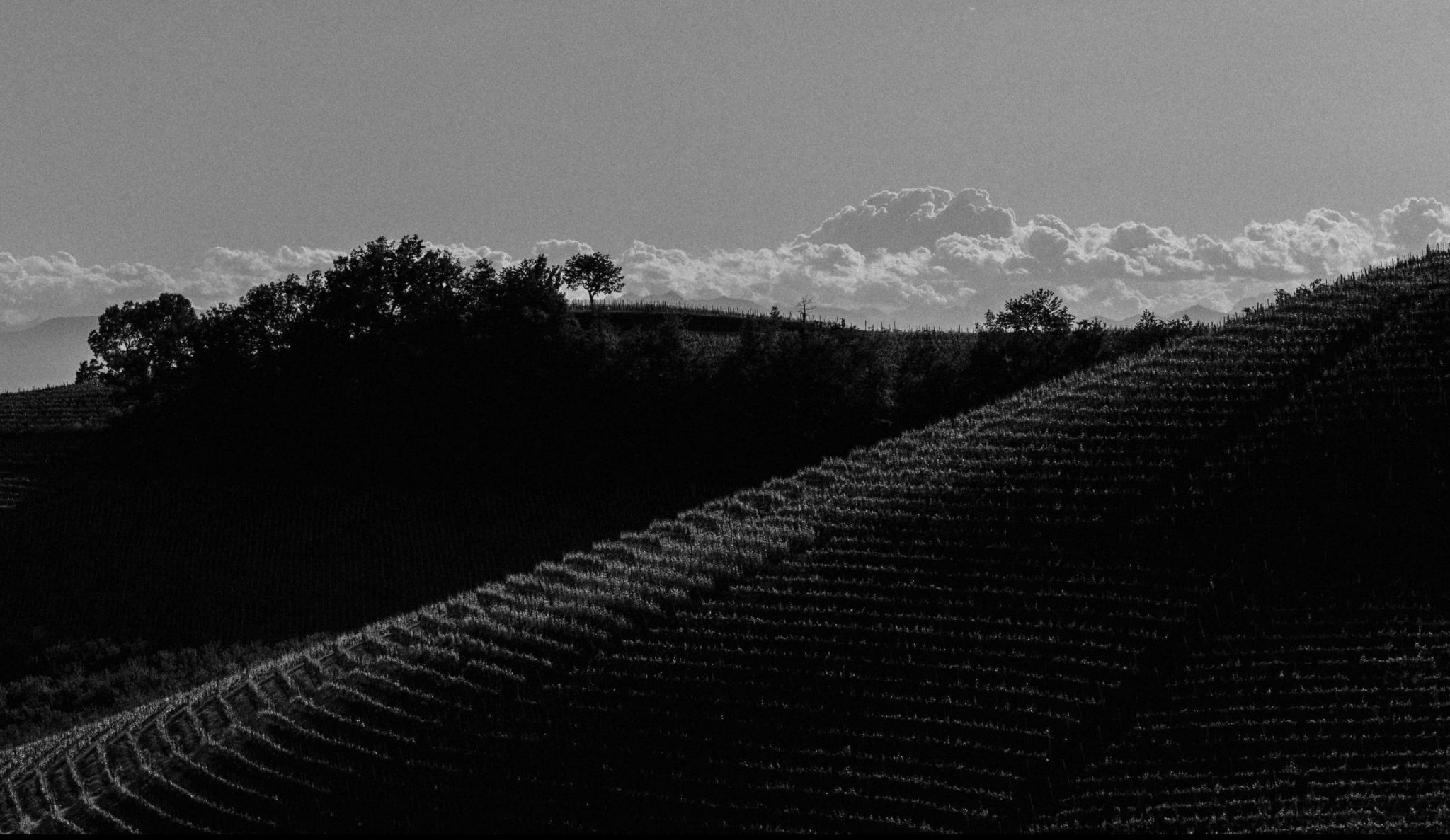 Black and White countryside view of Langhe, Piedmont | Casa di Langa
